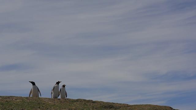 Pauline Delwaulle, l'ile, film, 24mn, production le fresnoy-studio national des arts contemporains, 2012