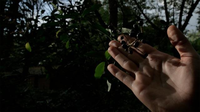 Walking Bacwards film Alex Cecchetti 2015